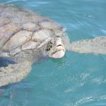 explore-cayman-by-land-and-sea-grand-cayman-cayman-islands-1